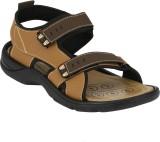 Imcolus Men BROWN Sandals