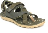 Walkline Men Mehndi Sandals