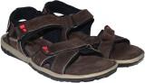 Strive Men Brown Sandals