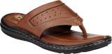 Franklien Men Tan Sandals