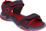 Hitcolus Men Dark Grey Sandals