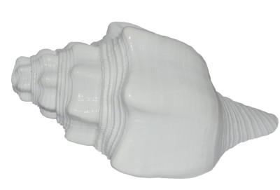 Spiritual Max Vishnu Vahan Garuda Shankh Sea Shell / Dattatreya (Bajanewala Puja Shankh) 17.5 Cms. Blowing Shankh(White)
