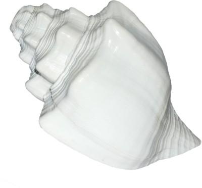 Spiritual Max Vishnu Vahan Garuda Shankh Sea Shell / Dattatreya (Bajanewala Puja Shankh) 20 Cms. Big Blowing Shankh(White)