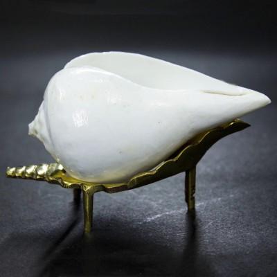THE HOLY MART VAAMVARTI ARAGHYA SHANKH (CONCH) Sacred Shankh(White)