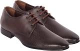 Moladz Rachel Lace Up Shoes (Brown)