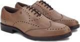Arrow Lace up Shoes (Brown)