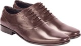 Moladz Finom Lace Up Shoes (Brown)