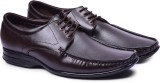 Andrew Scott Lace Up (Brown)