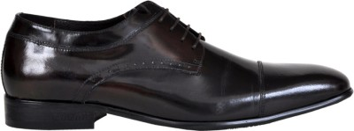 Pinellii Aries Oxford Brown Lace Up Shoes