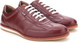 Arrow Sneakers (Burgundy)