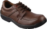 E-Lyte Hardy Walker Lace Up Shoes (Brown...