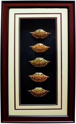HAASTIKA Wall Hanging 5-Crab shell Crab shell with Frame Showpiece  -  56 cm