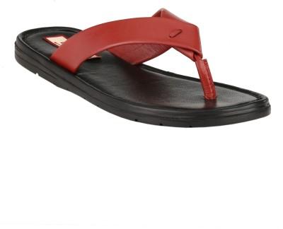 Beluga Slippers