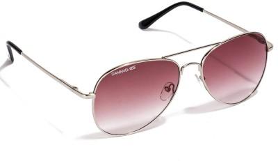 Danny Daze Aviator Sunglasses