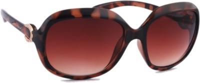 Joe Black JB-587-C3 Over-sized Sunglasses(Brown)