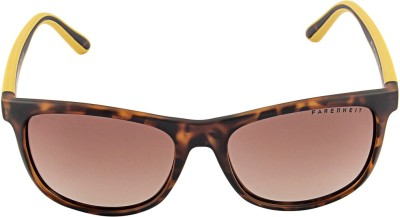 Farenheit 1307 Wayfarer Sunglasses(Brown)