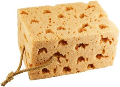 Evana Sucking Magic Coral Regular Sponge(Pack of 1)