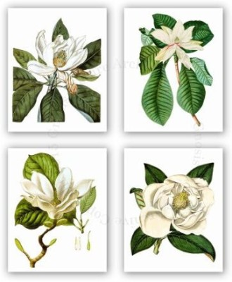 Gnosis Picture Archive Magnolia Flowers Vintage Botanical Wall Art